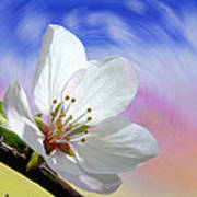 Pin Cherry Swirl Art Print