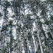 Pine Abstract Art Print
