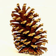 Pine Cone On White Art Print