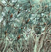 Pine Cones And Lace Lichen Art Print