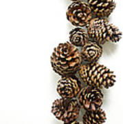 Pine Cones Print by Edward Fielding