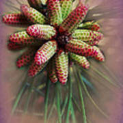 Pine Flower Bouquet Art Print