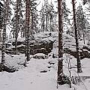 Pine Forest Winter Art Print