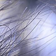 Pine Tree Needles 1 Art Print