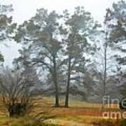 Pine Trees In Mist - Digital Paint 1 Art Print
