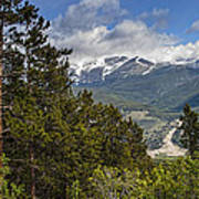 Pine Trees In The Rocky Mountain National Park Art Print