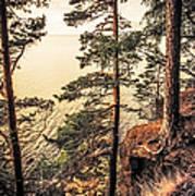 Pine Trees Of Holy Island Art Print