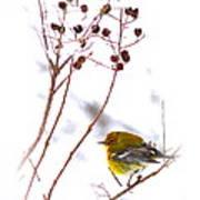 Pine Warbler-img-2143-001 Art Print