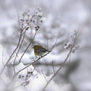 Pine Warbler In The Snow - Better Than Red Art Print