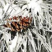 Pinecone In Snow Art Print