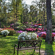 Pinecrest Gardens Art Print