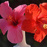 Pink And Red Hibiscus Art Print