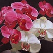 Pink And White Orchids Art Print