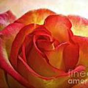 Pink And Yellow Rose - Digital Paint Art Print