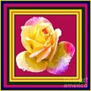 Pink And Yellow Rose Art Print