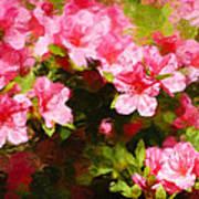Pink Azealas Art Print
