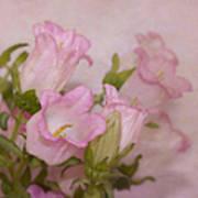 Pink Bell Flowers Art Print