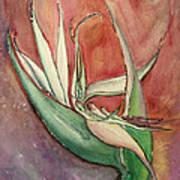 Pink Bird Of Paradise Art Print by Anais DelaVega