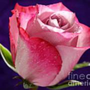 Pink Bliss Art Print
