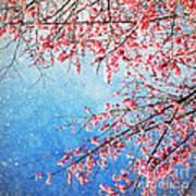 Pink Blossom Art Print by Setsiri Silapasuwanchai