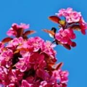 Pink Blossoms Blue Sky 031015a Art Print