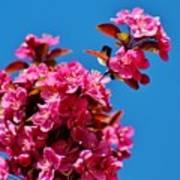 Pink Blossoms Blue Sky 031015aa Art Print
