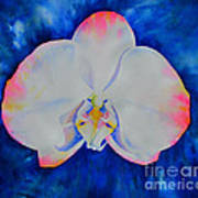 Pink Blush Orchid Art Print