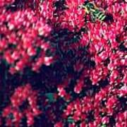 Pink Bumblebee Art Print