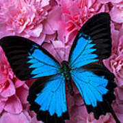 Pink Camilla And Blue Butterfly Art Print