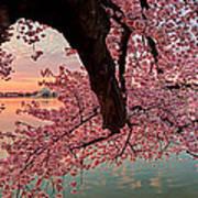 Pink Cherry Blossom Sunrise Art Print by Metro DC Photography