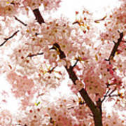 Pink Cherry Blossoms - Impressions Of Spring Art Print
