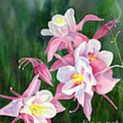 Pink Columbine Blossoms Art Print