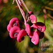 Pink Curls - Flower Macro Art Print