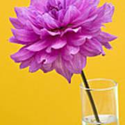 Pink Dahlia In A Vase Against Yellow Orange Background Art Print