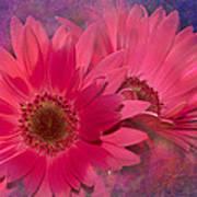 Pink Daisies Abstract Art Print