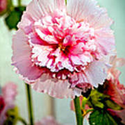 Pink Double Hollyhock Print by Robert Bales