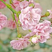 Pink Fairy Roses Art Print
