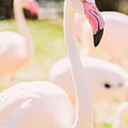 Pink Flamingo Portrait Art Print