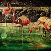 Pink Flamingos - Shangri-la Art Print