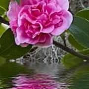 Pink Flower Reflection Art Print