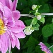 Pink Flower Shiver Art Print