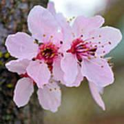 Pink Flowering Tree Floral Art Print