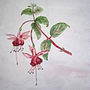 Pink Fuchsia's  Art Print