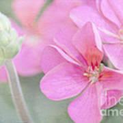 Pink Geraniums Art Print