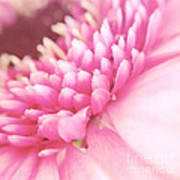 Pink Gerber Daisy Art Print