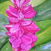 Pink Ginger Art Print
