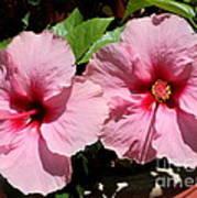 Pink Hibiscus Blooms Art Print