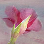 Pink Hibiscus Flower Art Print