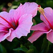 Pink Hibiscus II Art Print