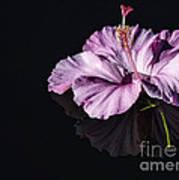 Pink Hibiscus On Black Water Art Print